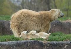 Mom! I Fell Over