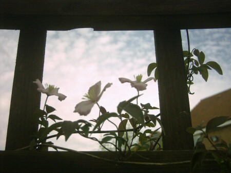 window450