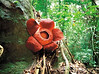 Gunung Gading National Park, Sarawak