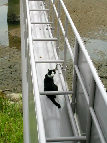 a cat on the rail(?)