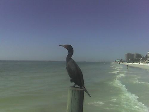 On Fort Myers Beach