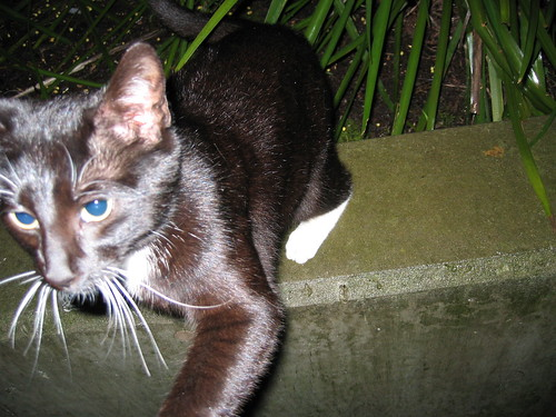 catblogging 3/11