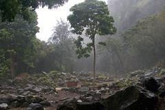 Rain at Honokowai