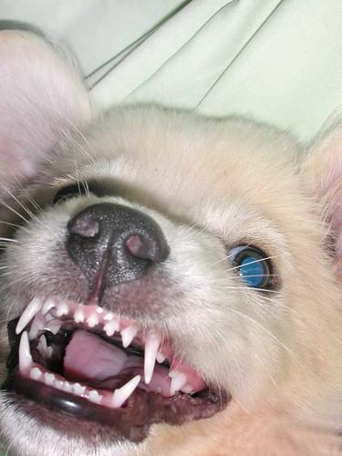 dogbat