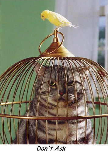 Mačke (hrana za mačke, najdraža pasmina mačaka, držanje mačke, kastriranje, slike mačaka..) 6727522_071d93d334