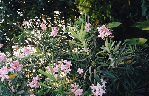 gee garden flower