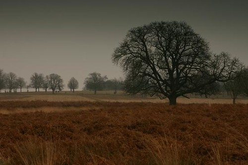 Lone tree in Richmond Park | by boncey