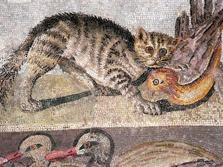 Colorful Cat Mosaic from a dining room (triclinium) in the House of the Faun in Pompeii | by mharrsch