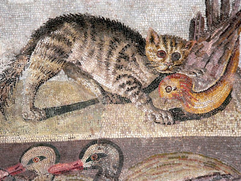 Colorful Cat Mosaic from a dining room (triclinium) in the House of the Faun in Pompeii
