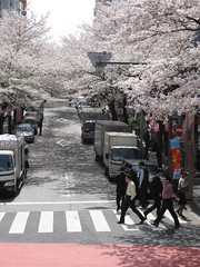 桜丘007