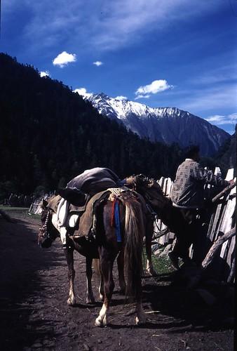 horses ready