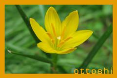 Flower | by ottoshi