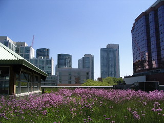MEC's green roof among others   by 416style