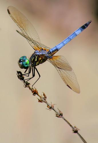 macro geotagged dragonfly explore interestingness62 i500
