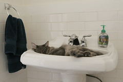 Oliver's New Sink | by aprillynn77