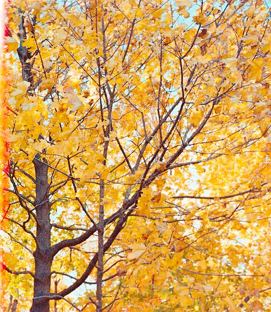 Fall Foliage - Caumsett State Park
