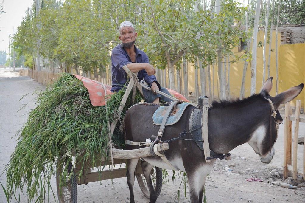 Uyghur farmer