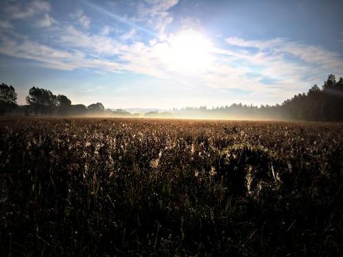 silhouette fog sunrise oxfordshire englishcountryside ukenglandgreatbritain iphone5s