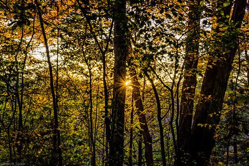 morning autumn light fall sunrise dawn morninglight october conservation greenwood area rays sunstar 2015 d610 greenwoodconservationarea briandtucker october2015