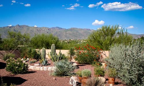 flowers trees arizona cactus mountains color hotel us tucson az bloom desertplants
