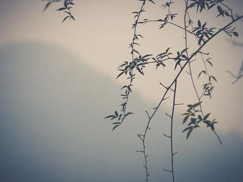 china travel autumn sky mist mountain tree fall nature leaves silhouette landscape asia branch cloudy hill olympus telephoto westlake hangzhou minimalism hazy minimalistic omd panasonic100300mm em5mkii