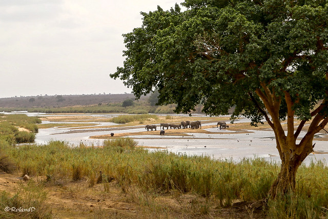 Elefantenherde am Sabieriver