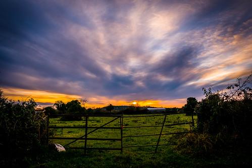 evening sun sunset wide gate old pillar hedge