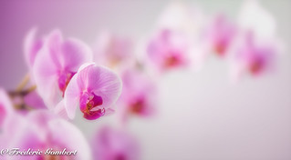 orchid colony | by frederic.gombert