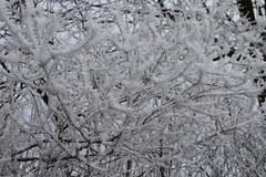 winter-2017-18