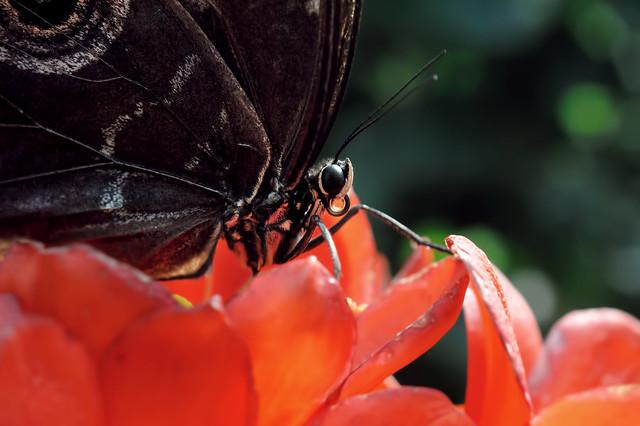 Papillons en Liberté 2017 - Photo 10