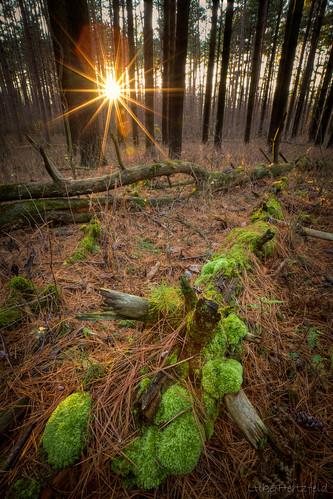 park sunset pine forest moss wideangle flare preserve northwestohio oakopeningspreserve