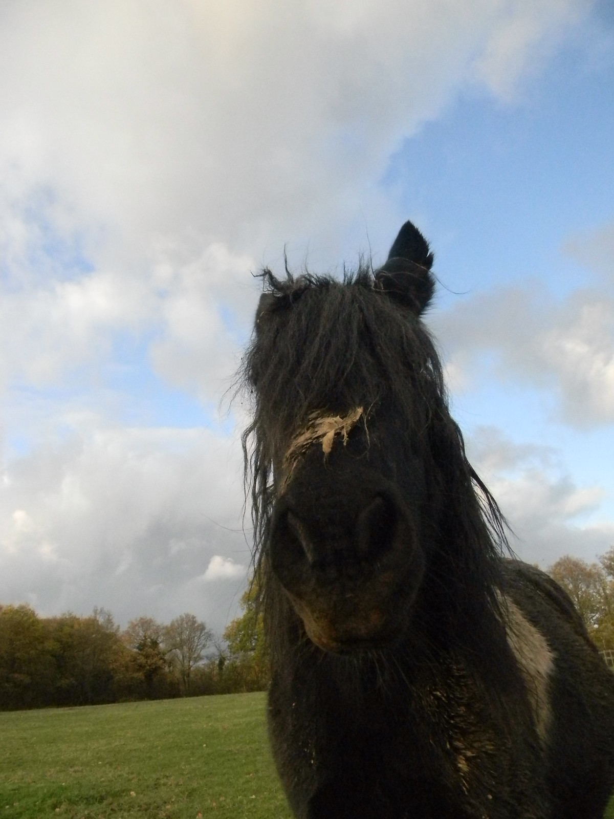 Muddy horse Oxted Circular