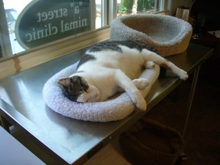 Does this bed make me look fat? | by astreetanimalclinic