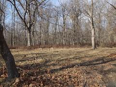 日, 2011-12-25 13:22 - 1777 trail