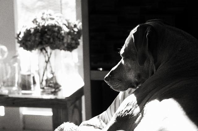 winter sun days