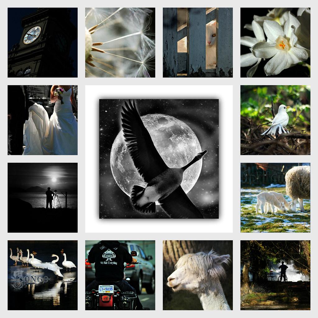 my B&W (almost) . . . by dragonflydreams88