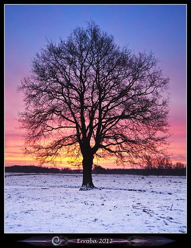pink blue winter orange snow cold tree ice yellow sunrise canon fire belgium belgique belgië 1020mm erlend mechelen 60d hetbroek erroba robaye