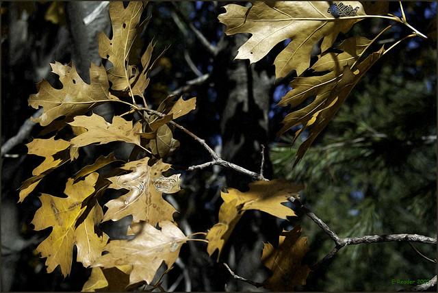 Yosemite Fall Foliage