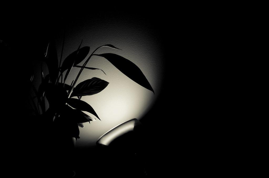 Silouhette Végétale Living Colors Noir Et Blanc Fort C