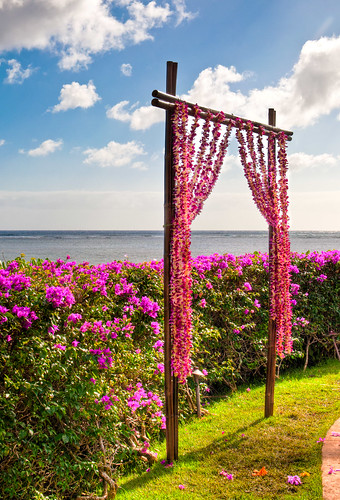 Hawaiian Wedding Arch | by leftride