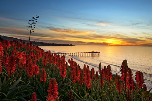 ocean california sunset sea sky tree water coast pier aloe pacific lajolla agave succulents scripps aloevera ccl uwb barbadensis