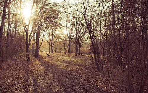autumn trees fall leaves bench lomo foliage lörrach gruett