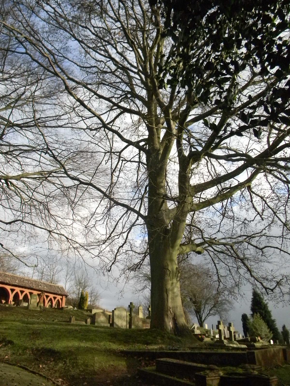 Tree on the hill - Watts chapel Wanborough to Godalming