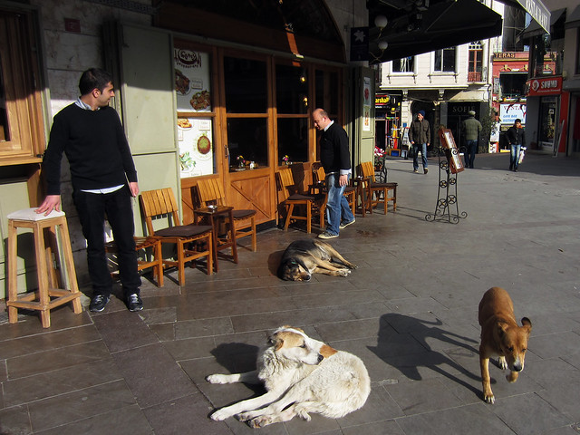 Istanbul Dogs