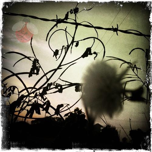 flower nature fence louisiana barbedwire iphone erath iphoneography instagram instagramapp cajunsunset cajunladybugcreations