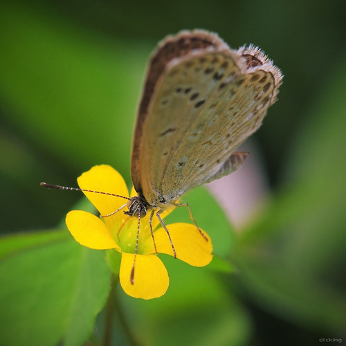 flower macro nature floral butterfly garden petals flora dof natural blossom bokeh ngc insects bloom blooming bướm