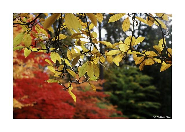 Lithia Park Fall Colors.