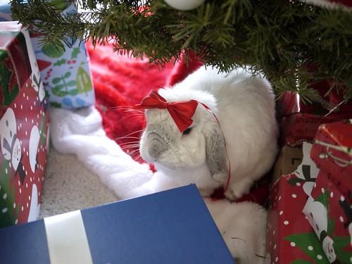 christmas presents | by migi328