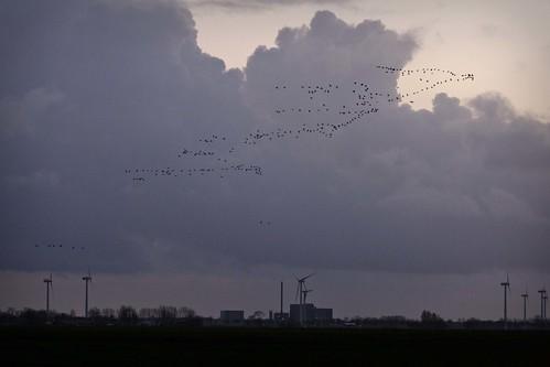 deutschland wolken location dämmerung ort niedersachsen reiderland vogelschwarm landschaftsfotografie rheiderland bunderhee bingumgaste