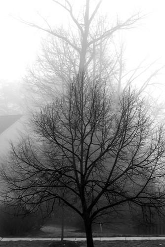 The fog   by theartofaccessories
